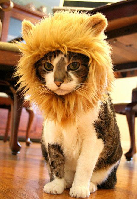 gato mas machote